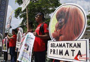 selamatkan primata profauna