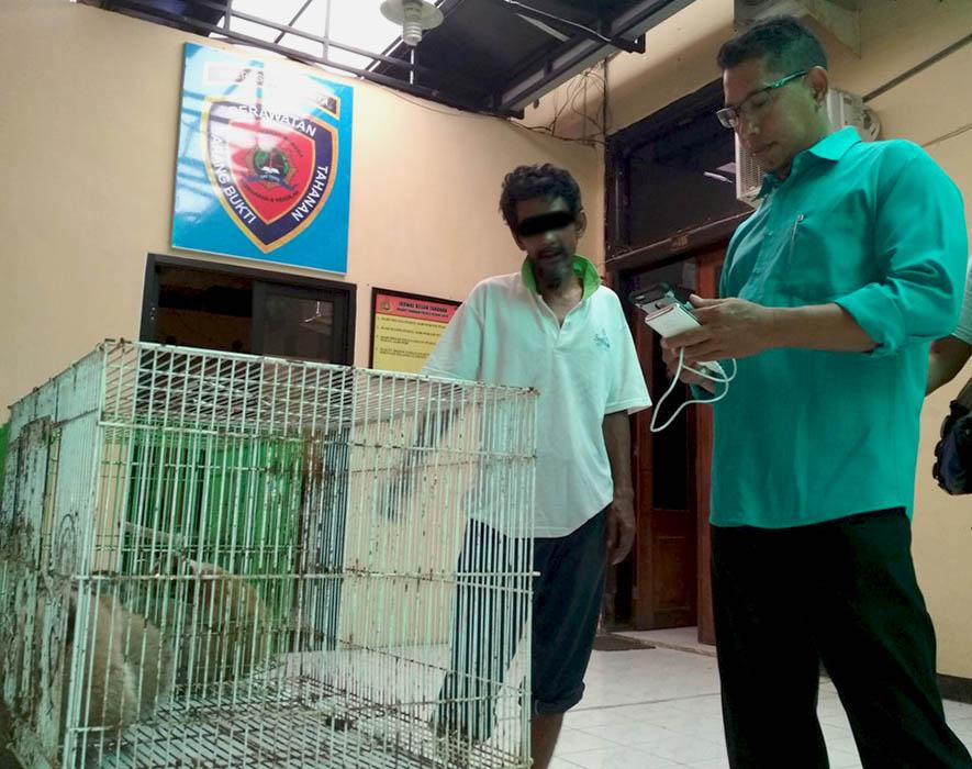 tujuh individu kukang sumatera diamankan