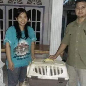 kukang sumatera jambi