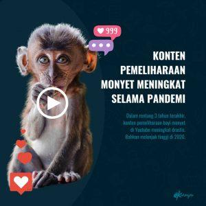 Takedown Pemelihara Monyet