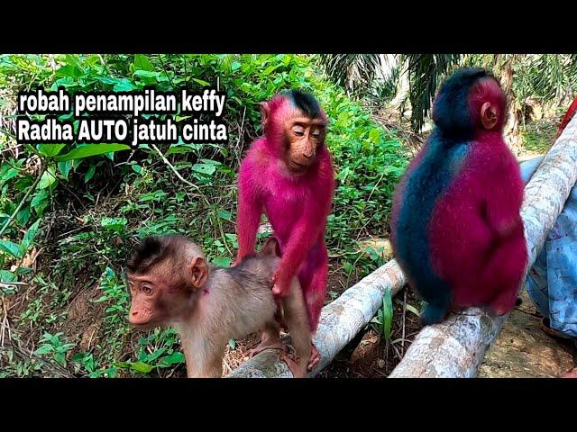 monyet semir warna