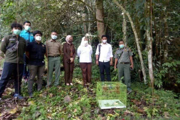 kukang sumatera